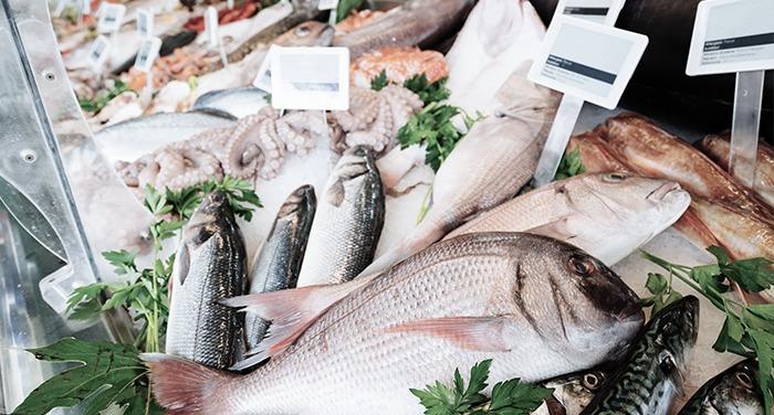 Sector pesca Solunion